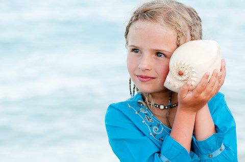 how-come-we-can-hear-the-sound-of-the-ocean-in-a-big-seashell