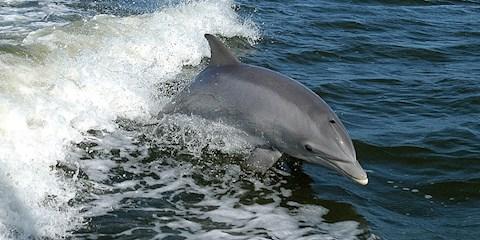 mit-isznak-a-balnak-es-delfinek